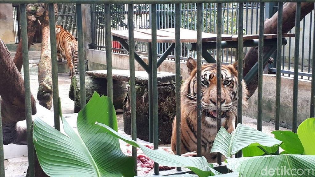 Liburan Akhir Tahun: Mampir ke Bonbin Siantar Zoo yang Sejuk