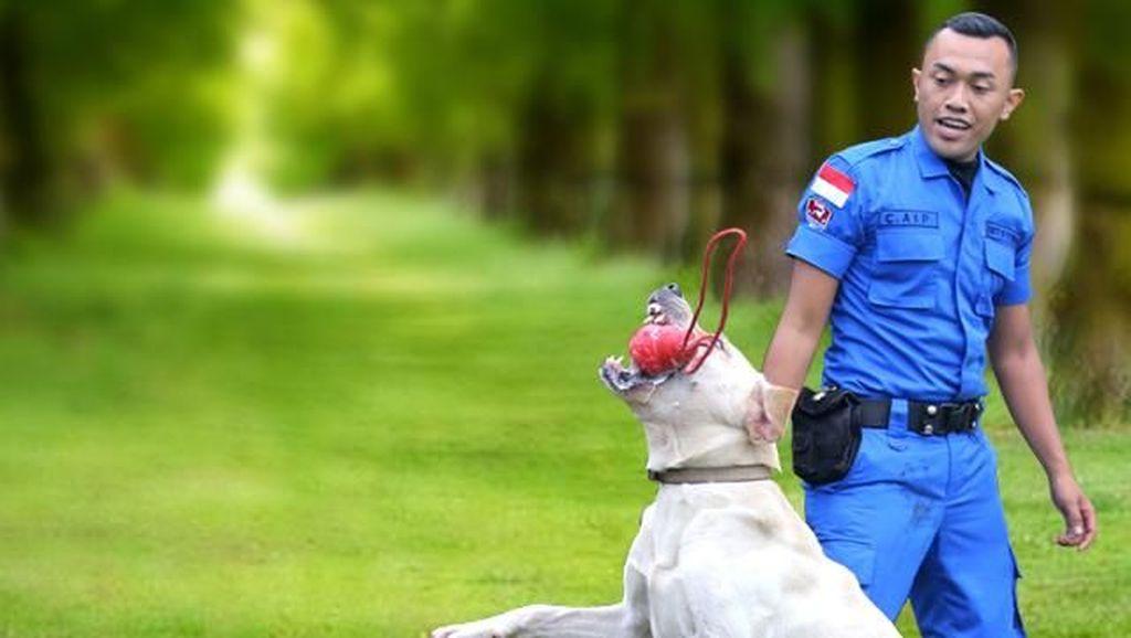 Anjing-anjing BNN Pemburu Bandar Narkoba