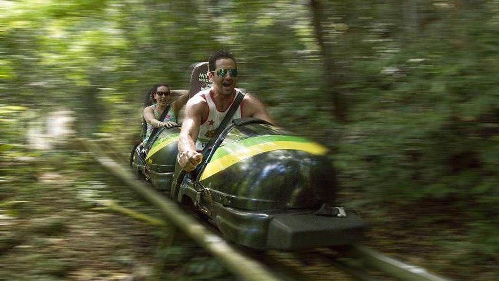 Foto: Main Kereta Luncur Salju, Tapi di Hutan Jamaika