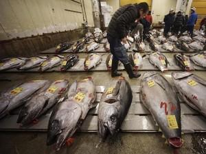 Seekor Ikan Tuna Bluefin Seberat 405 Kg Berhasil Dilelang Seharga Rp 4.4 Milliar