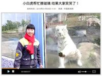 (Screenshot China News)