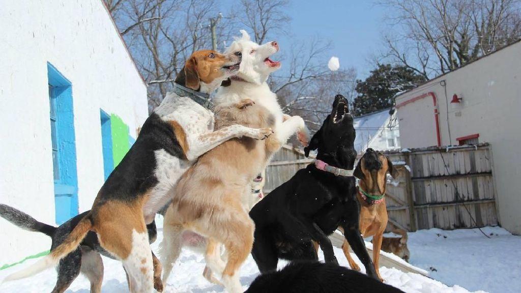 Foto: Penitipan Anjing Paling Bahagia Ada di Amerika