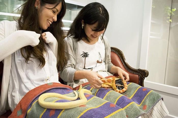Hasil gambar untuk kafe ular di jepang