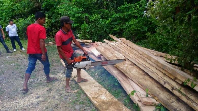 2 Kubik Kayu Pembalakan Liar di Aceh Dimusnahkan, Pelaku Diamankan