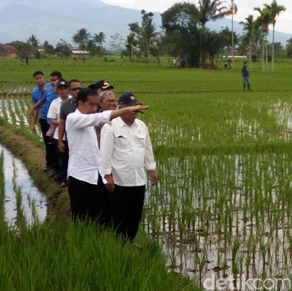 Jokowi Blusukan Lintasi Hamparan Sawah di Tasikmalaya