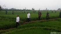 Jokowi Ingin Warga Dibayar Per Hari di Program Padat Karya Cash