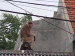 Sempat Kabur, Bekantan Kebun Binatang Surabaya Dapat Ditangkap