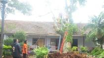 Pohon Kanthil Tempat Merenung RA Kartini di Jepara Tumbang