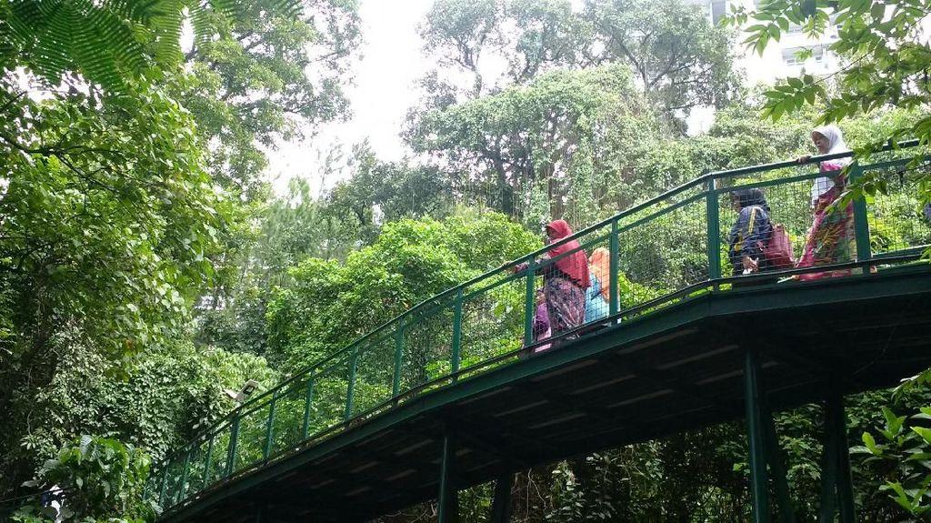 Bandung Punya Forest Walk Terpanjang di ASEAN