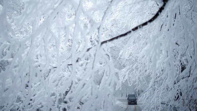 Foto Hutan yang Masih Memutih karena Salju Tebal