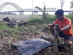 Belum Diautopsi, Bangkai Orangutan Tanpa Kepala Sudah Dikubur