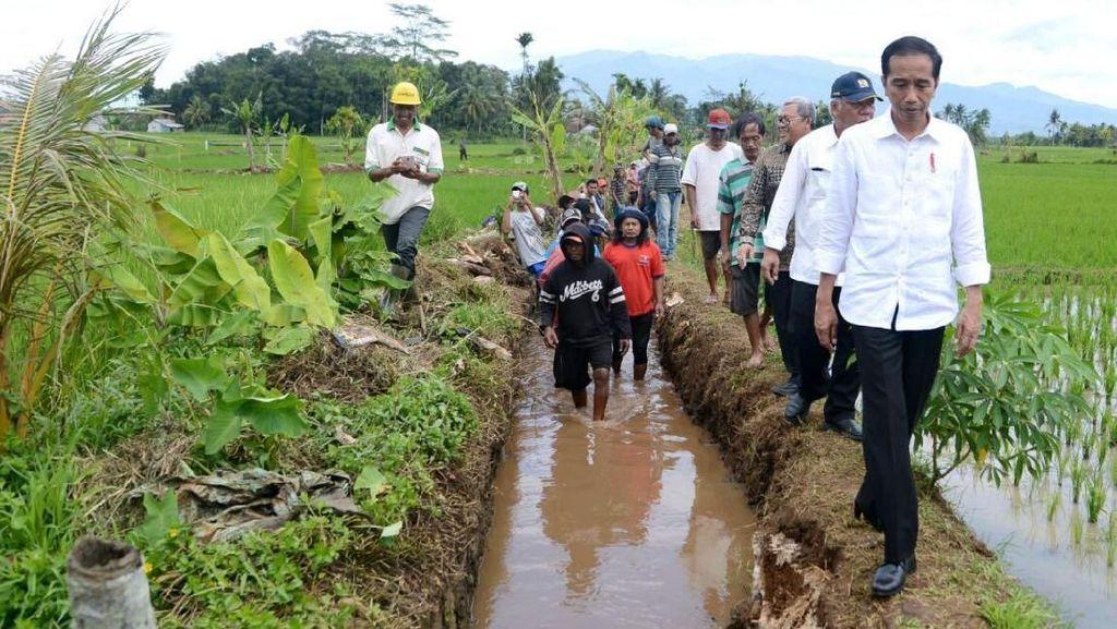Susuri Sawah, Jokowi Cek Padat Karya Cash di Tasikmalaya