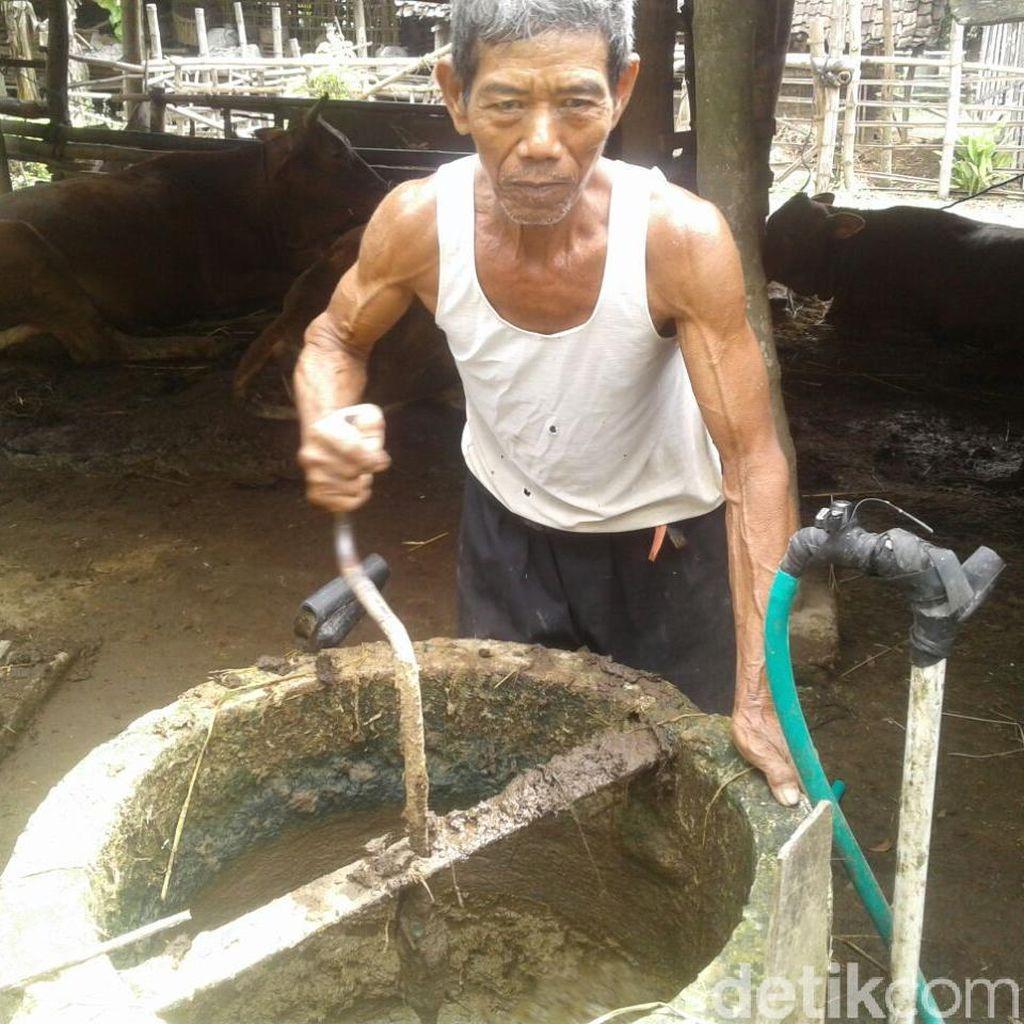 Subarno, Manfaatkan Kotoran Sapi Jadi Bahan Bakar dan Pupuk Kandang