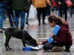 Foto: Keakraban Gadis Pengamen Suriah dengan Anjing Liar di Turki