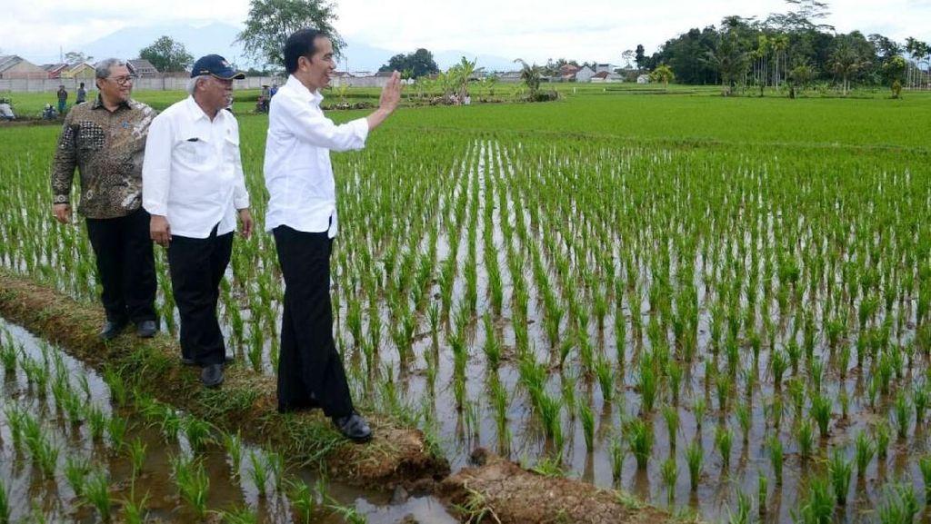 Jokowi Minta Revitalisasi Saribu Rumah Gadang Selesai Tahun Ini