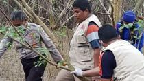 Geger Mayat Perempuan Tanpa Lengan dan Kaki Tersangkut Mangrove