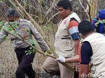 Ini Hasil Penyelidikan Mayat Perempuan Mutilasi Tersangkut Mangrove