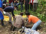 Autopsi Orangutan Tanpa Kepala: 17 Peluru Bersarang di Tubuh
