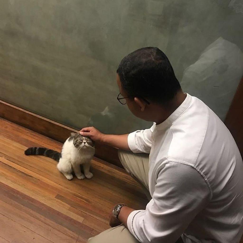Cerita Keluarga Gubernur Anies dan Loki Si Kucing