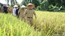 Dikenal Daerah Surplus Beras, Banyuwangi Tidak Butuh Beras Impor