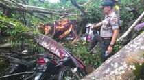 Pohon Beringin Raksasa Tumbang Rusak Rumah dan 6 Kendaraan