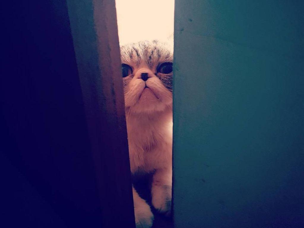 Ini Loki Si Kucing yang Bikin Anies dan Keluarga Bersedih
