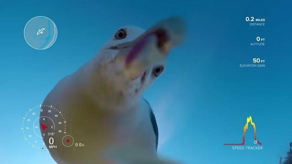 Dicuri Burung, Kamera GoPro Ini Rekam Video Keren