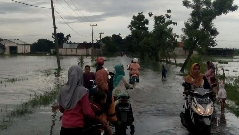 Banjir Akibat Hujan Seharian Rendam Jalan dan Sawah di Lamongan