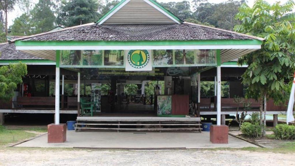 Hutan Wisata Pengusir Jenuh: Bukit Bangkirai