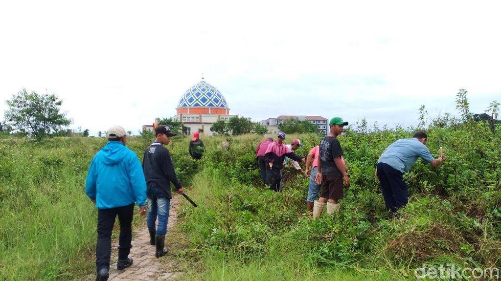 Senangnya Warga Ikut Program Padat Karya Jokowi