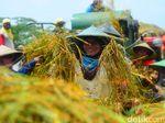 Harga Beras di Lamongan Naik, Pedagang Minta Pemerintah Tidak Impor
