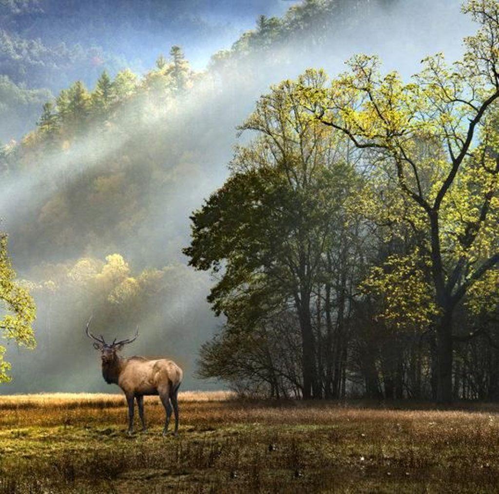 Karya Memukau Jawara Kontes Foto Warna Alam