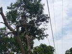 Tersengat Listrik, Tukang Tebang Pohon Jatuh dan Meninggal