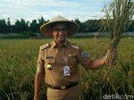 Pakai Caping, Anies Panen Padi di Cakung