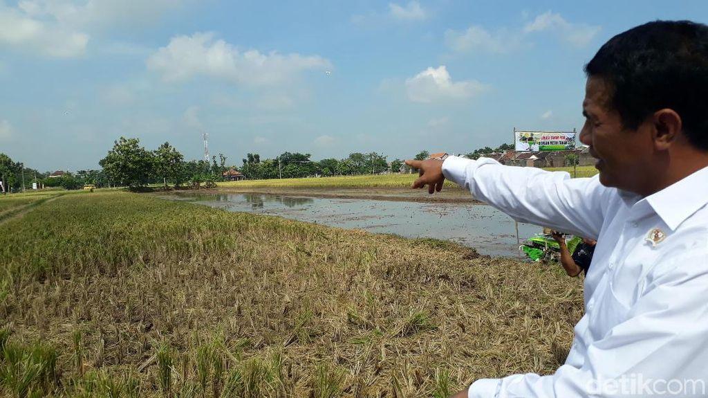 Panen Padi di Jateng, Mentan Jajal Drone Pertanian