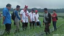 Ke Banyuwangi, Tommy Soeharto Beri Ilmu Tanam Bawang Putih ke Petani