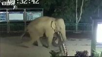 Unik, Saat Gajah Liar Diam-diam Lompati Pagar Perbatasan 2 Negara