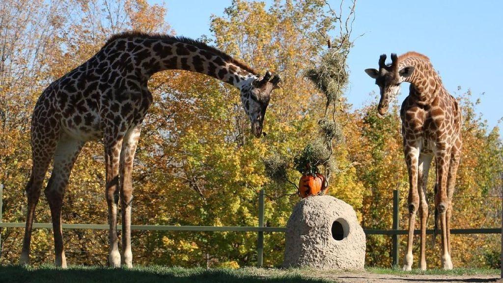 Foto: 8 Kebun Binatang Terbesar di Dunia