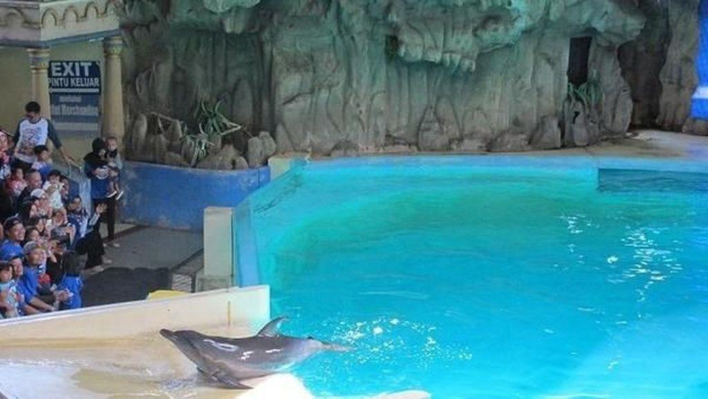 Serunya Liburan Weekend Bersama Lumba-lumba Pintar