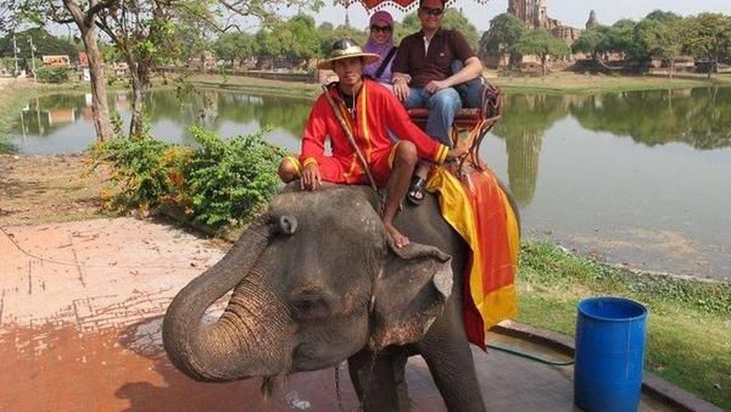 Serasa di Way Kambas, Bersenang-bersenang dengan Gajah