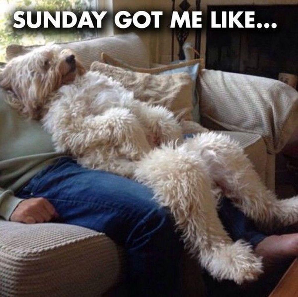 Mamang hari Minggu paling asik bermalas-malasan. Foto: Internet