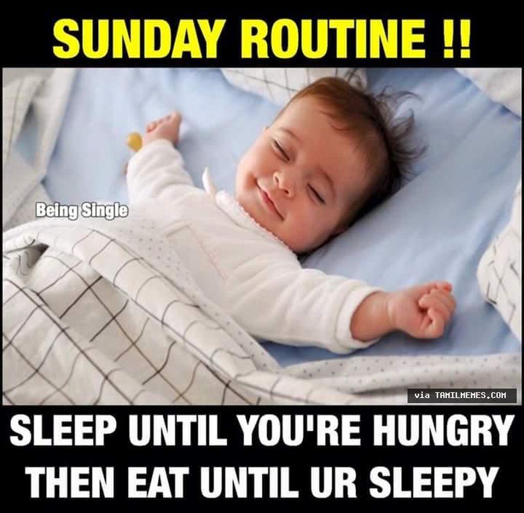 Tidur sampai lapar.Tapisetelah makan ya tidur lagi. Foto: Internet