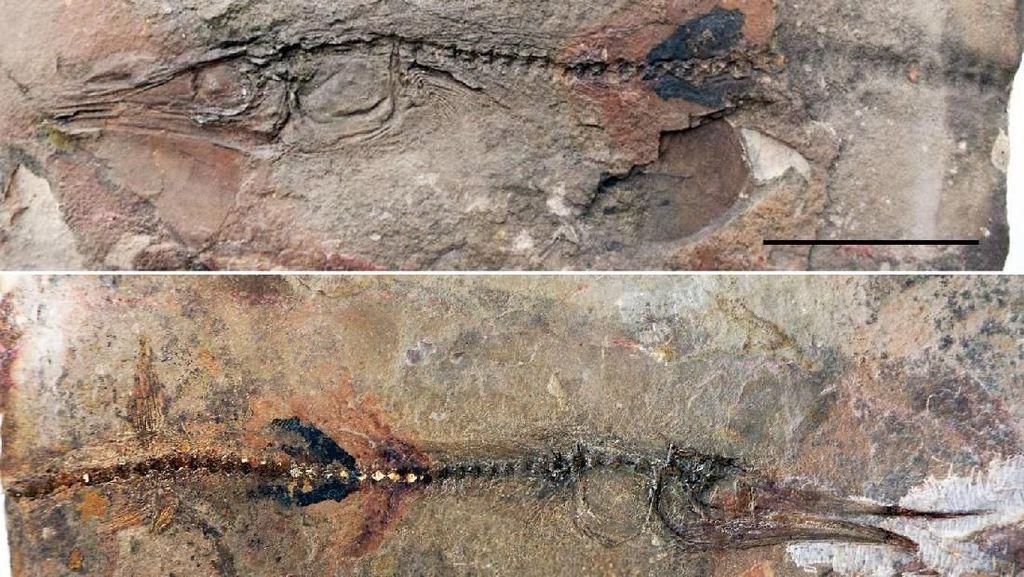 Keren! Bocah 10 Tahun Temukan Fosil Spesies Ikan Langka