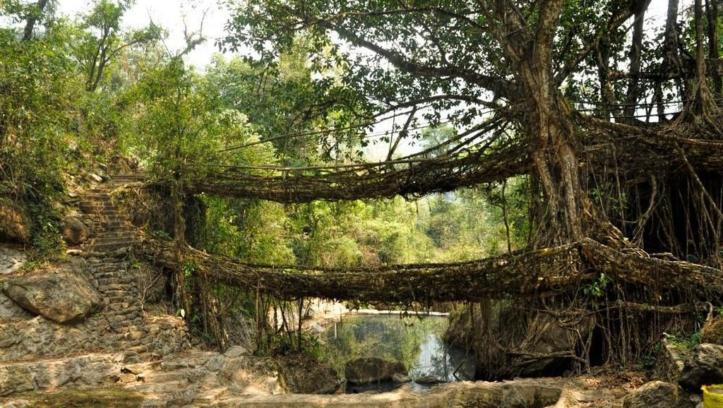 Cerita Jembatan Akar Hidup di India yang Ditinggalkan