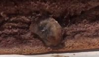 Heboh Video Pillow Cake Cokelat Berbelatung, Ini Penjelasan MOMOIRO