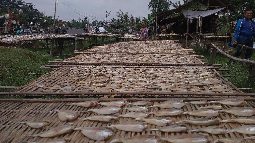 Melihat Nasib Produsen Ikan Asin di Tengah Cuaca Ekstrem