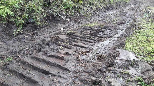 Ilegal Logging, Pelaku Bikin Jalan 4 Km di Pedalaman Hutan Sulsel