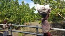 Foto: Begini Kampung di Asmat yang Bersahabat Gulita Tanpa Listrik