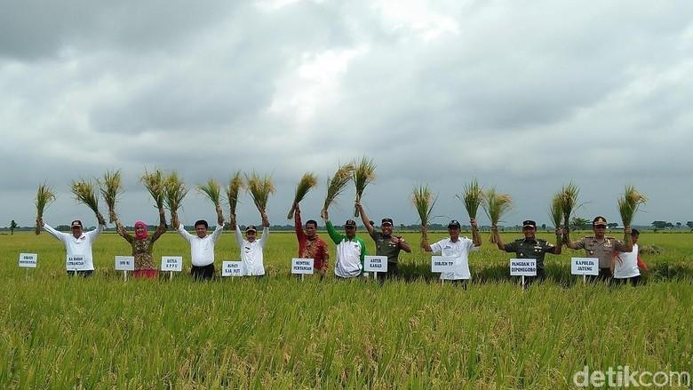 Panen Padi di Pati, Mentan: Harga Gabah Turun hingga Rp 1.000/Kg
