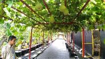 Surabaya Kini Punya Mini Agrowisata, Main ke Sana Yuk